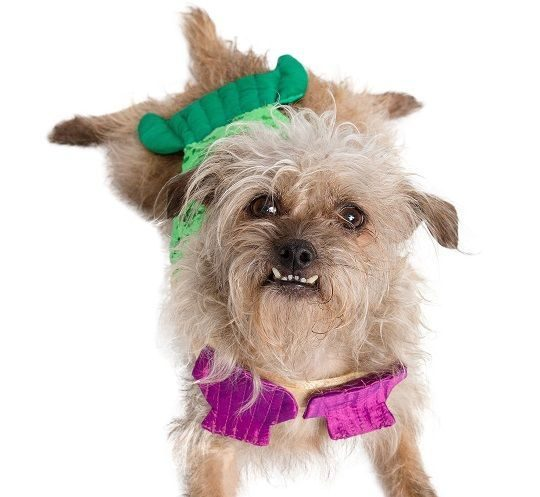 2be395b84d428 Pet Krewe Inc., a New Orleans, Louisiana-based pet costume company, secured  its seed financing of an undisclosed amount.